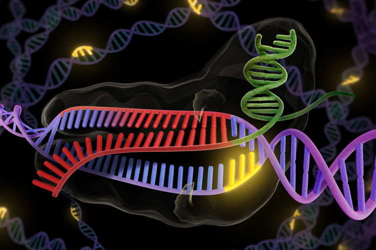 Photo of Grant Funding Automated Genome Editing System
